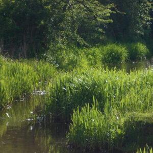 Caldon Canal Feeder