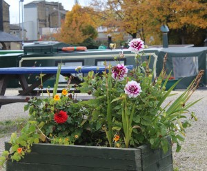 flower-beds-brighouse-basin